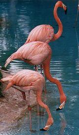 Flamingos: Brightening up the neighbourhood
