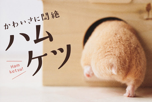 Photos of Hamster Rear Ends Are Hit in Japan - Japan Real Time - WSJ