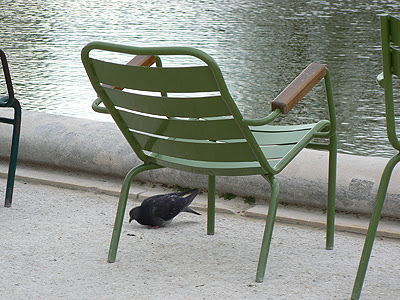 siège et pigeons.jpg