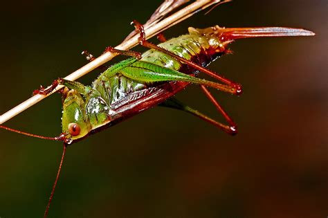 stock photo  biological cicada grasshopper
