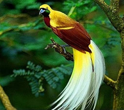 mp3 download free forever birds of paradise colorful prancer