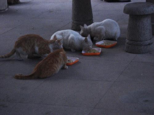 Cats in Shenyang, China _ 0168