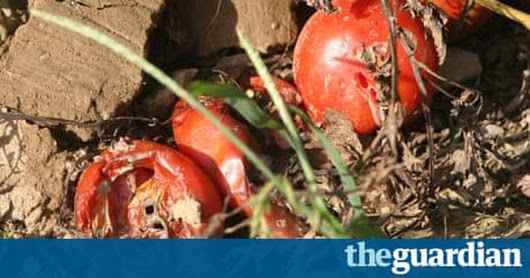 Alabama immigration: crops rot as workers vanish to avoid crackdown | US news | The Guardian