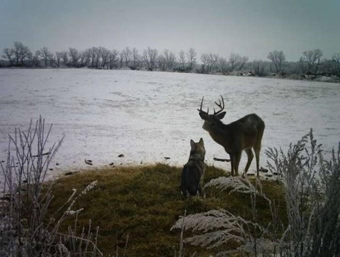 Perrita se escapa de casa, cuando la encuentran ya se había hecho amiga de los ciervos salvajes