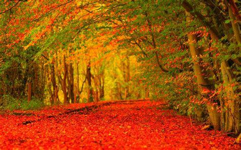 autumn hd wallpapers wallpaper cave