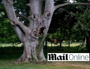 Árvore em Bury St Edmunds, Suffolk, no Reino Unido