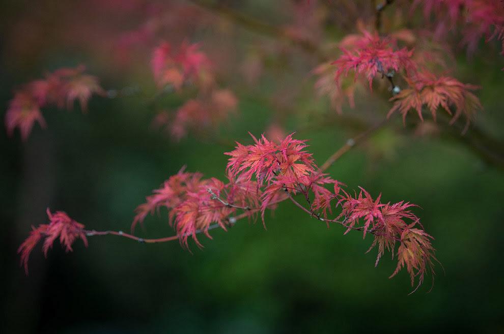 Осенние деревья в парке Royal Victoria Park, Англия