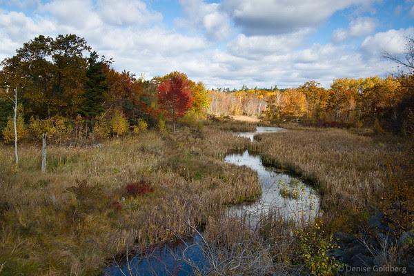 colors in Acadia, October 2011