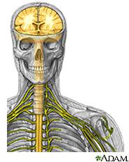 Ilustración del cerebro, la médula espinal y los nervios periféricos