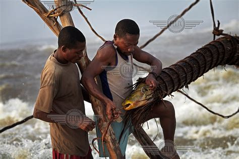 fishermen remove  huge carp     baskets