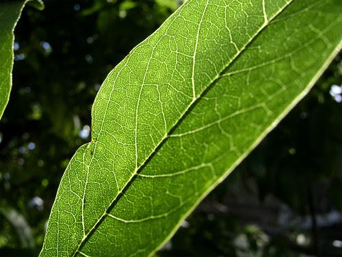 hojas-arbol-01
