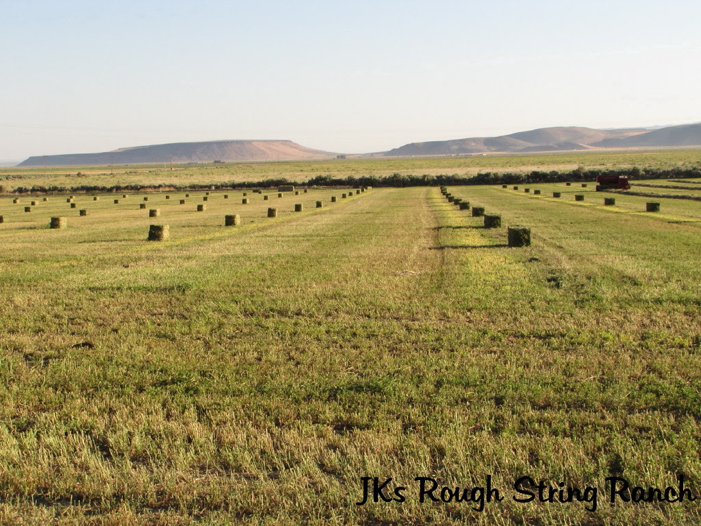 All the Pretty Bales in a Row