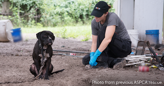 ASPCA Assists U.S. Marshals Service in Federal Dogfighting Case