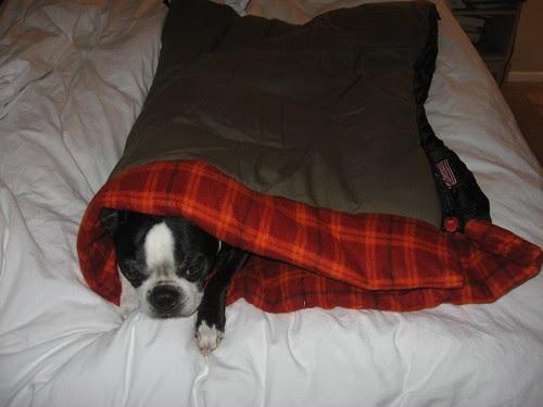 Joey in his sleeping bag