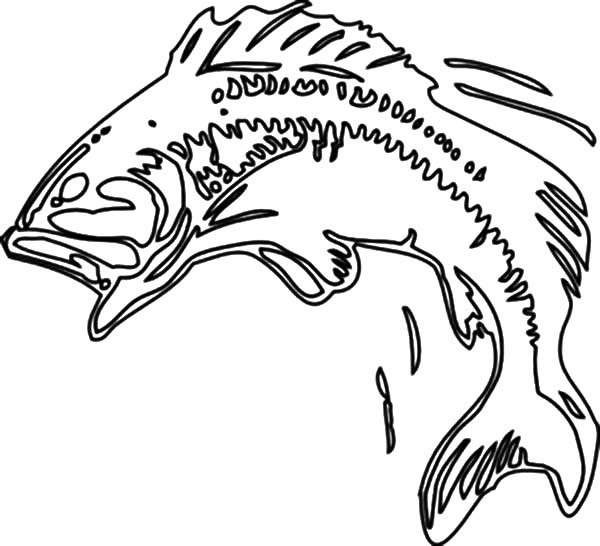 Bass Fish Body Print Coloring Pages | Best Place to Color