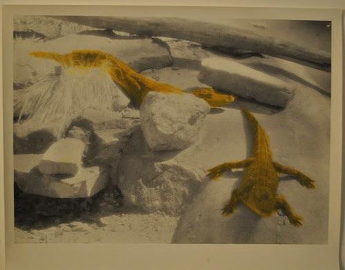 Crocodiles on Rocks, Catoctin Mountain Zoo #3, Thurmont, Maryland by deneebarr