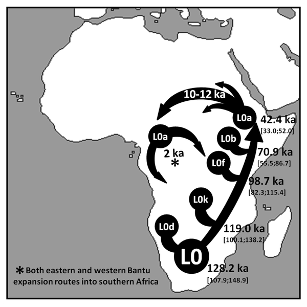 Figure 5 Schematic representation of the major inferred migrations involving mtDNA haplogroup L0.