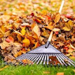 How to Rake Your Leaves More Quickly - Atlantic Maintenance Group