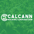 CalCann Holdings Emerges as a Strong Voice Amidst Trump Crackdown