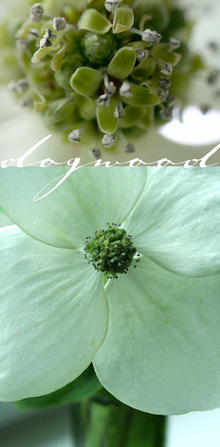 Closer to Dogwood