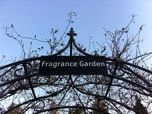 Fragrance Garden by Ayala Moriel