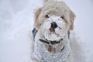 Snow face