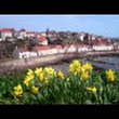 Tour Scotland April Video Daffodils Viewpoint Pittenweem East Neuk Of Fife