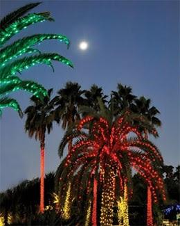 Palm Tree Christmas Card Florida Linen
