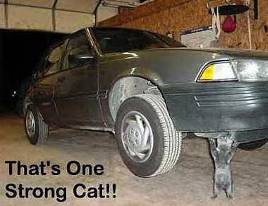 Strong Cat