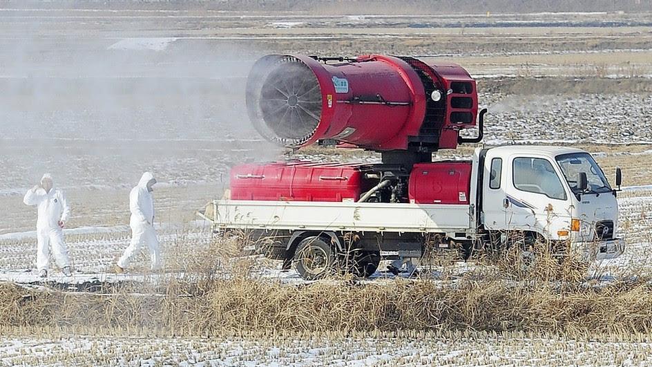 Corea del Sur lucha contra la gripe aviar