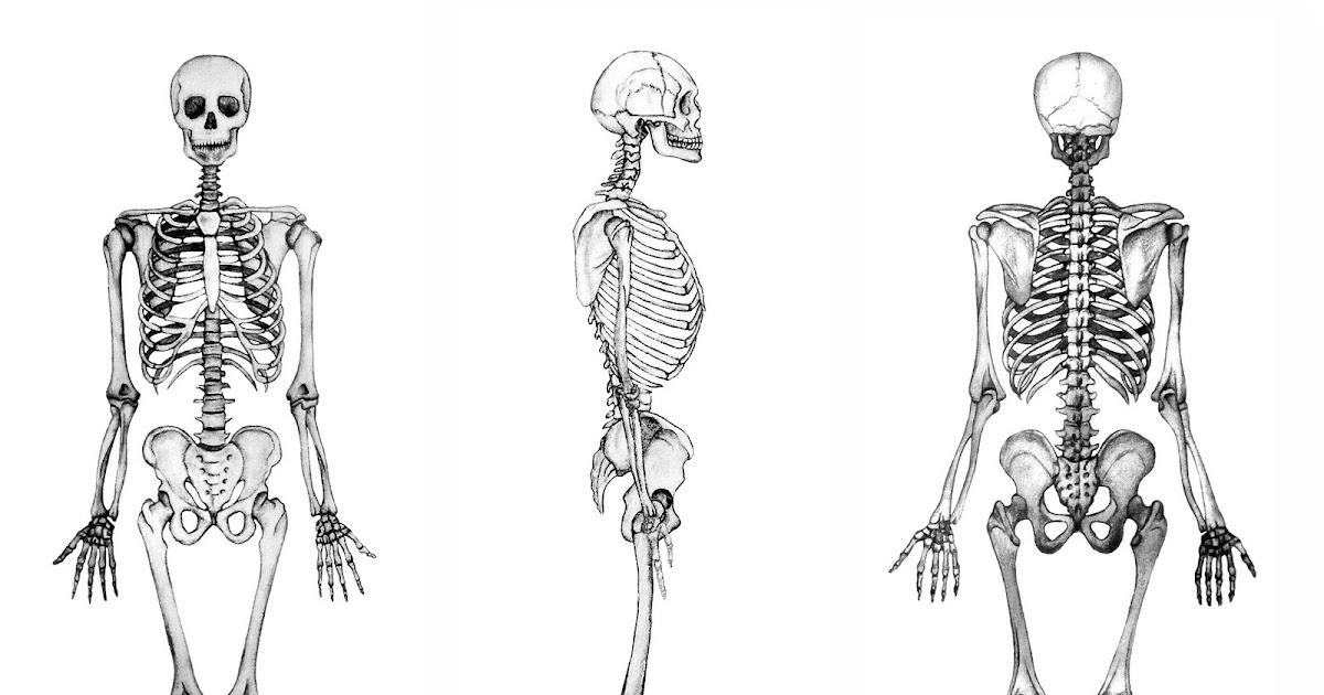Anatomía Regional: Generalidades. Huesos, músculo, arterias, venas y ...