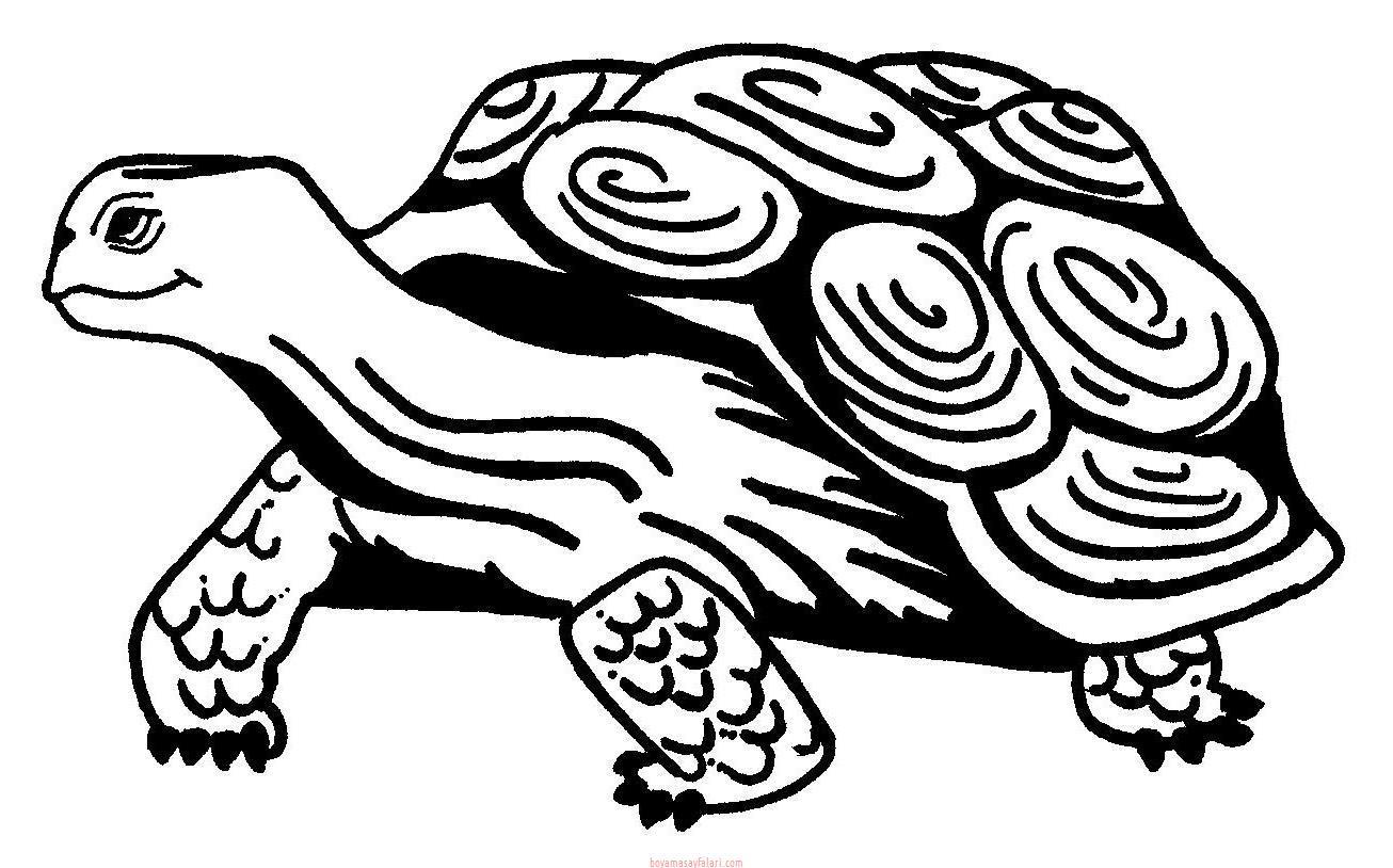 Kaplumbağa Boyama Sayfaları 16 Sınıf öğretmenleri Için ücretsiz
