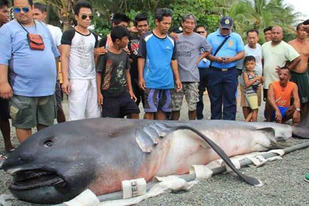 tubarão raro encontrado na praia é sinal do Apocalipse