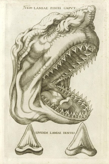 """Steno used this picture from an unpublished Vatican catalogue of 1667 in his treatise Canis carchariae dissectum caput to show that the """"tongue stones"""" are fossil shark teeth"""