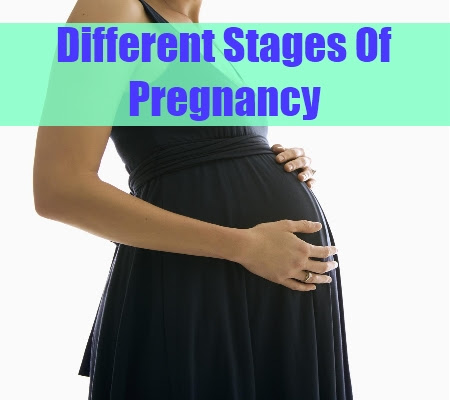 Information On Different Pregnancy Stages - Different ...