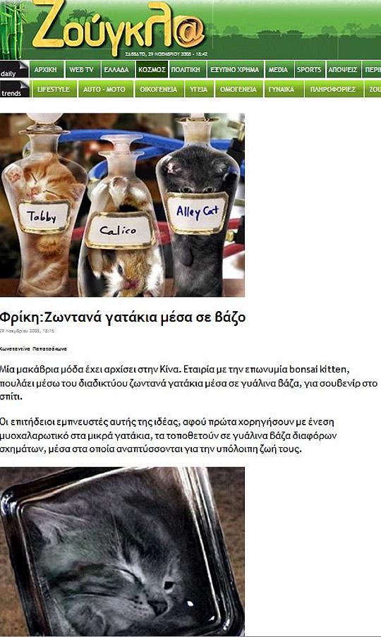 Zougla.gr - Γατάκια σε μπουκάλια (bonsai κitten)
