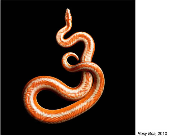 Mark Laita фотографии змей 15 (594x438, 32Kb)