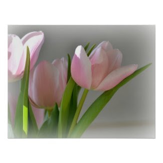 Three Pink Tulips print