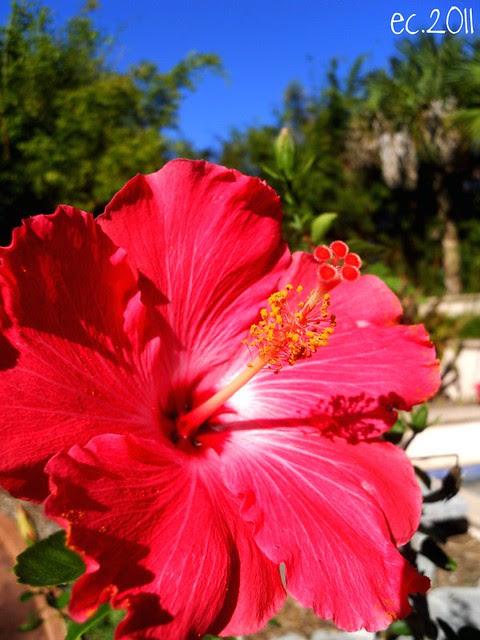 Florida Flower