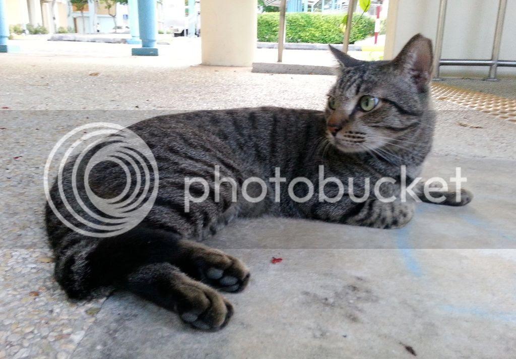 photo CatJRT17May07.jpg