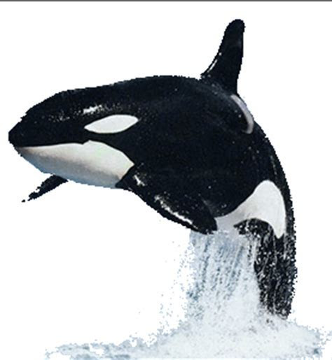 Image   Dr. Blowhole   Orca.png   Nicktoons Toons Wars
