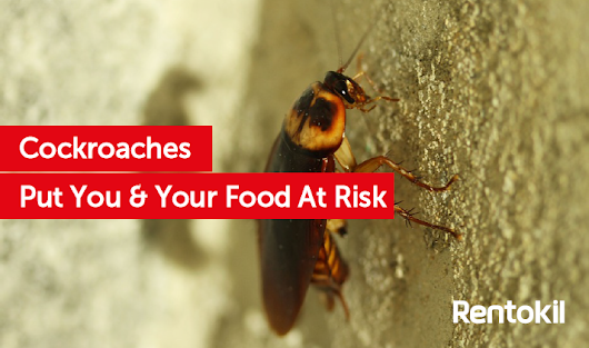 Cockroaches put you and your food at risk