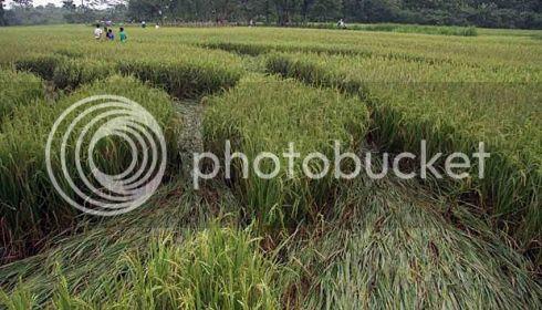 Crop  Circle Sleman Yogya