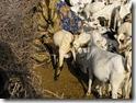 SOMALIA 103