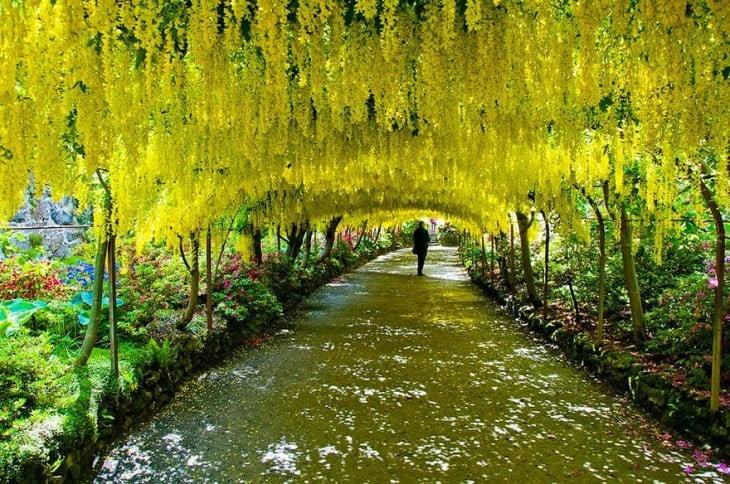 El caldero de sol como hacer un jardin magico for El jardin magico