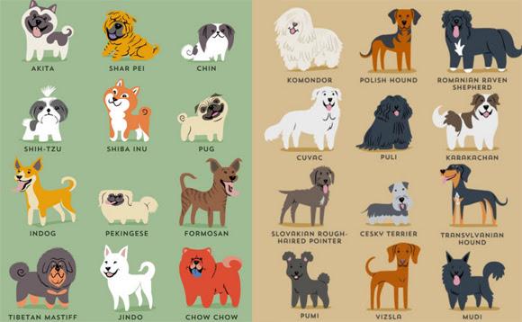 あの犬の意外な原産地がわかる原産地別世界の犬種イラストポスター