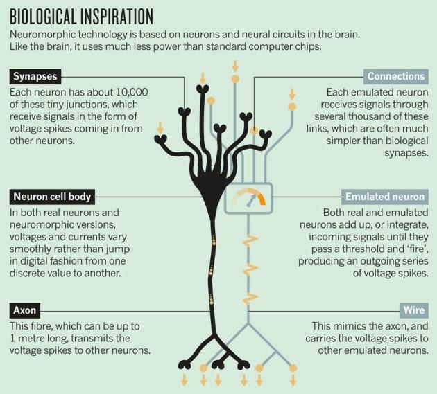 http://www.nature.com/polopoly_fs/7.13495.1383568372!/image/Brain-chip.jpg_gen/derivatives/landscape_630/Brain-chip.jpg