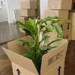 How to Pack Plants for Moving | Home Guides | SF Gate
