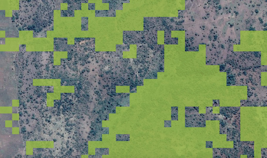 How scientists use Google and crowdsourcing to map uncharted forests