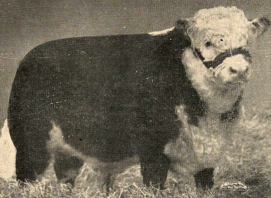History 1951: Cattle breeder brings fame to Canada